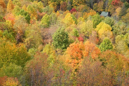 colorful fall photos from the Great Smoky Mountains National Park with orange, green and yellow Фото со стока