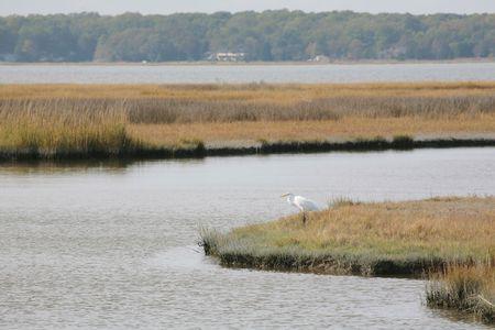 葉と池と大きな白い鳥と緑豊かな夏の自然の生息地 写真素材 - 4642746