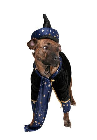 one happy wizard dog clothed over white photo