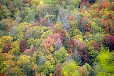 smokies: coloridas fotos de la ca�da Great Smoky Mountains National Park con naranja, verde y amarillo