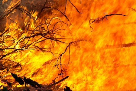 wildfire: closeup of tree branches burning in a large outdoor fire