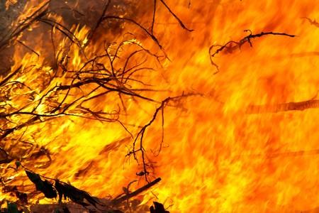 Closeup of Tree Branches in einem großen outdoor Feuer brennen Standard-Bild - 7749748