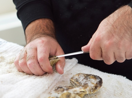 man shucking an oyster with a knife closeup with hands photo