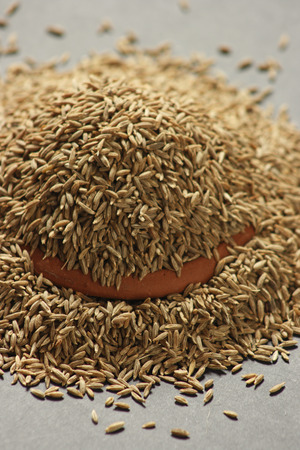 either: Cumin can be used to season many dishes, either ground or as whole seeds, as it draws out their natural sweetnesses  It is traditionally added to curries, enchiladas, tacosCumin is help in treatment of the common cold, when added to hot milk and consumed  Stock Photo