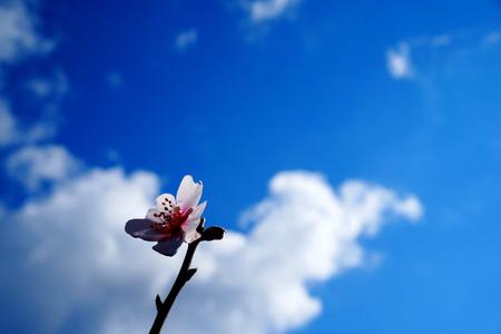 Flower in the sky Фото со стока