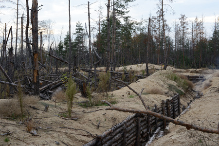 trenches: The war in Ukraine. Lugansk region, on October 7, 2016. Trees damaged by shelling from the weapon. The fortifications and trenches of the Ukrainian army Stock Photo