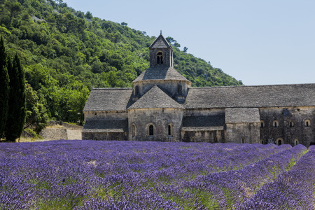 gordes: different view of the Abbey of Gordes and its rows of lavender