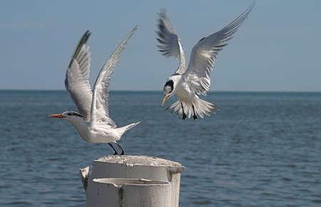 Flying Together Stok Fotoğraf