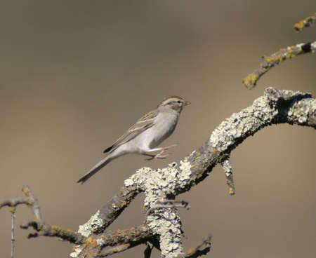 Small bird jumping on the branch tree