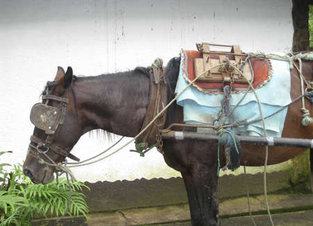 An old horse standing in a mexican farm