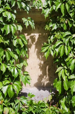 Leaves framing a Wall Under the Sunlight