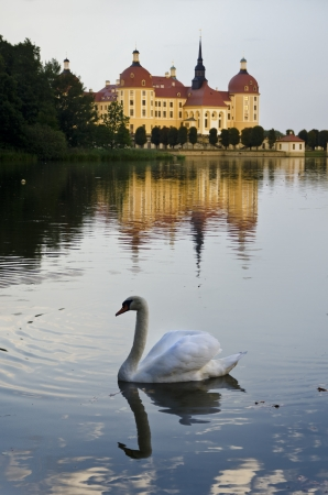 A Swan Swims next to Moritzburg Castle Editorial