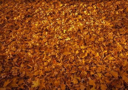 Dead leaves in the fall. 免版税图像