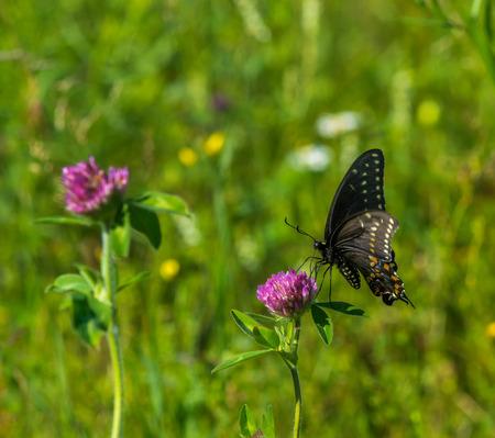 Rondelle noire sur une fleur