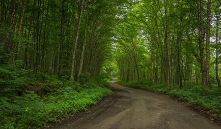 A very green forest road in Parc de la Jacques Cartier Stock Photo