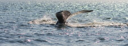 Whale watcing in the St-Laurence river