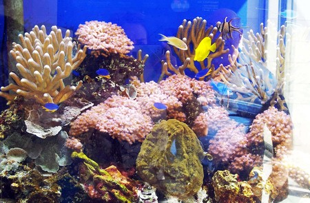 marine environment: Aquarius Photo 1