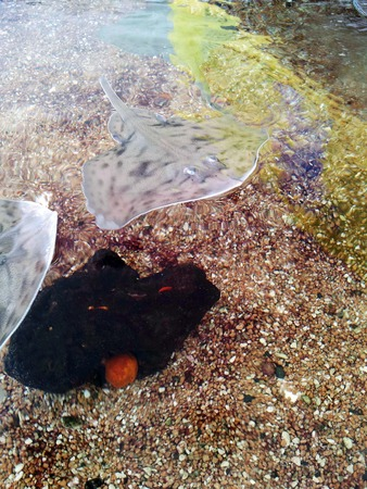 marine environment: Aquarius Photo 11