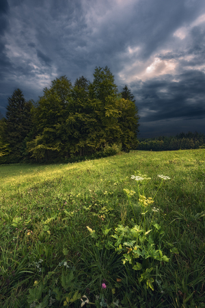 A vertical shot taken in the area of Winterthur, a city in the north of Switzerland during a thunderstorm. In the front you see some flowers in the grass while in the back there is the beginning of a forest visible. Standard-Bild