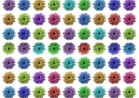 Macro from wild flower on a white background Foto de archivo - 117135503