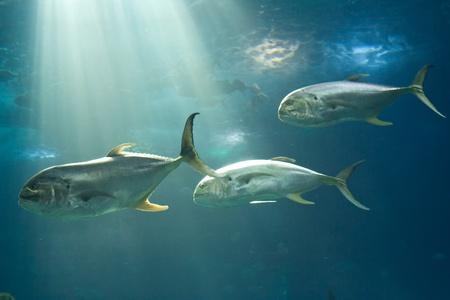 oceanarium: Fishes in Lisbon Oceanarium