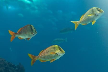 Fishes in Lisbon Oceanarium Stock Photo - 12692397