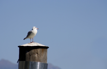 Seagull Stock Photo - 16995339