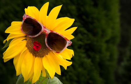 Miss Sunny Funny Stock Photo