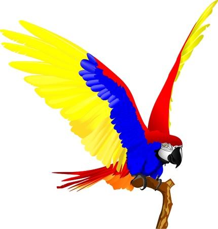 aves caricatura: Guacamayo de aves Vectores
