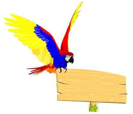 scarlet: macaw bird