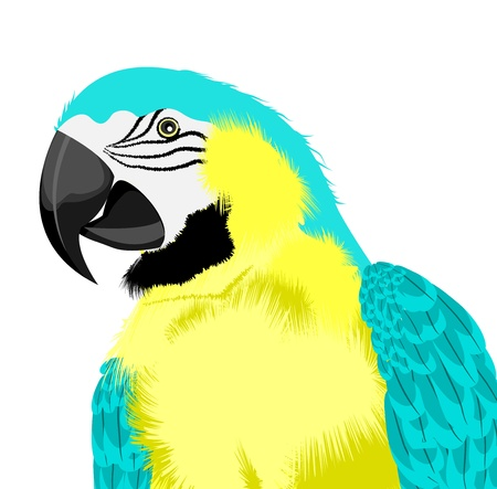 yellow parrot Stock Vector - 15274799