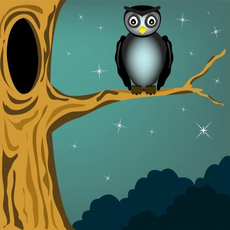 black owl in the dark night Illustration