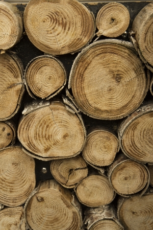 close up of logs of wood photo