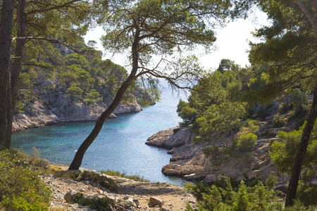 mediterranean forest: calanques of cassis, near marseille