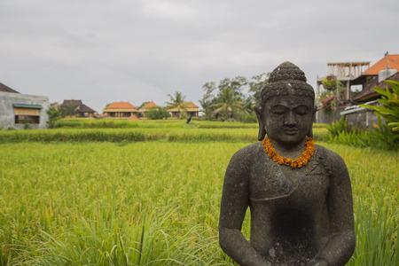 paddies: Stone sculpture in rice paddies