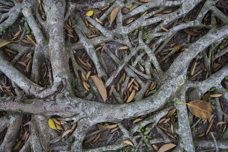 sprawled: Tree roots during the summer Stock Photo