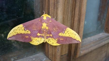 moth in window Banco de Imagens