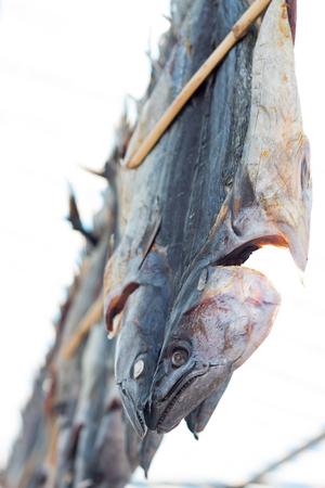 Hanged salted fish (beautiful, Thunnus alalunga). Street market (Spain)