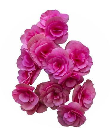 Beautiful pink Bouquet flowers isolated on white background
