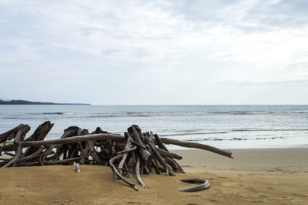 Die tree on the beach with seascape background