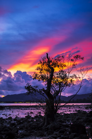 Firey of sunset sky with mangrove tree at coast photo
