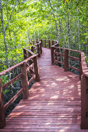 Red wooden bridge in green tropical forest photo