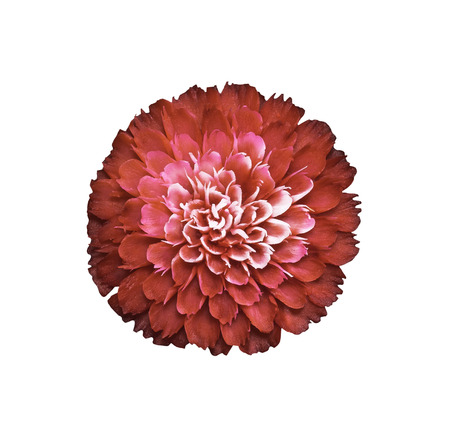 desgn: Beautiful red soap carving flower isolated on white