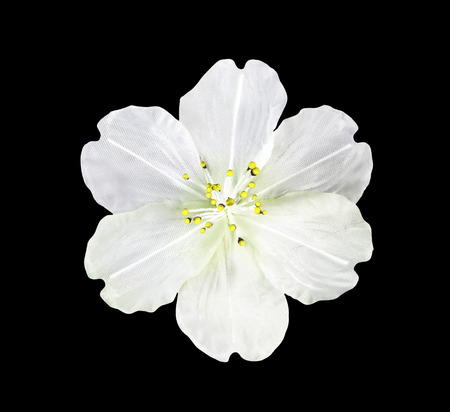 artifical: White artifical flower isolated on black with clipping path