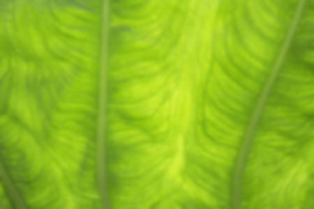 Green blurred natural of foliage pattern background
