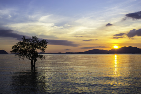Seascape and sunset with mangrove tree on twilight