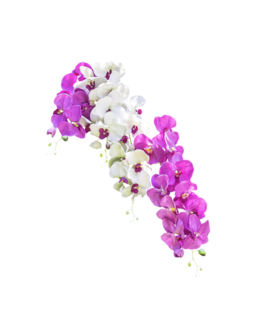 White and pink orchid flowers isolated on white background Stock Photo