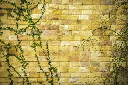Closeup green plants on rock wall background Stock Photo