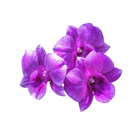 Three magenta orchid flowers isolated on white with clipping path