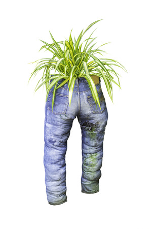 blue green background: Green plant with old blue jeans isolated on white background Stock Photo